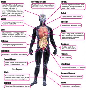 alcohol damages the body